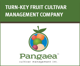 PANGAEA CULTIVAR - TURN-KEY FRUIT CULTIVAR MANAGEMENT COMPANY